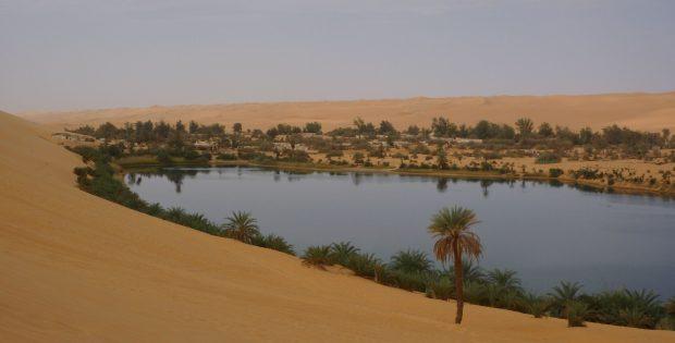 Oase Gabrun, See, von Palmen umsäumt
